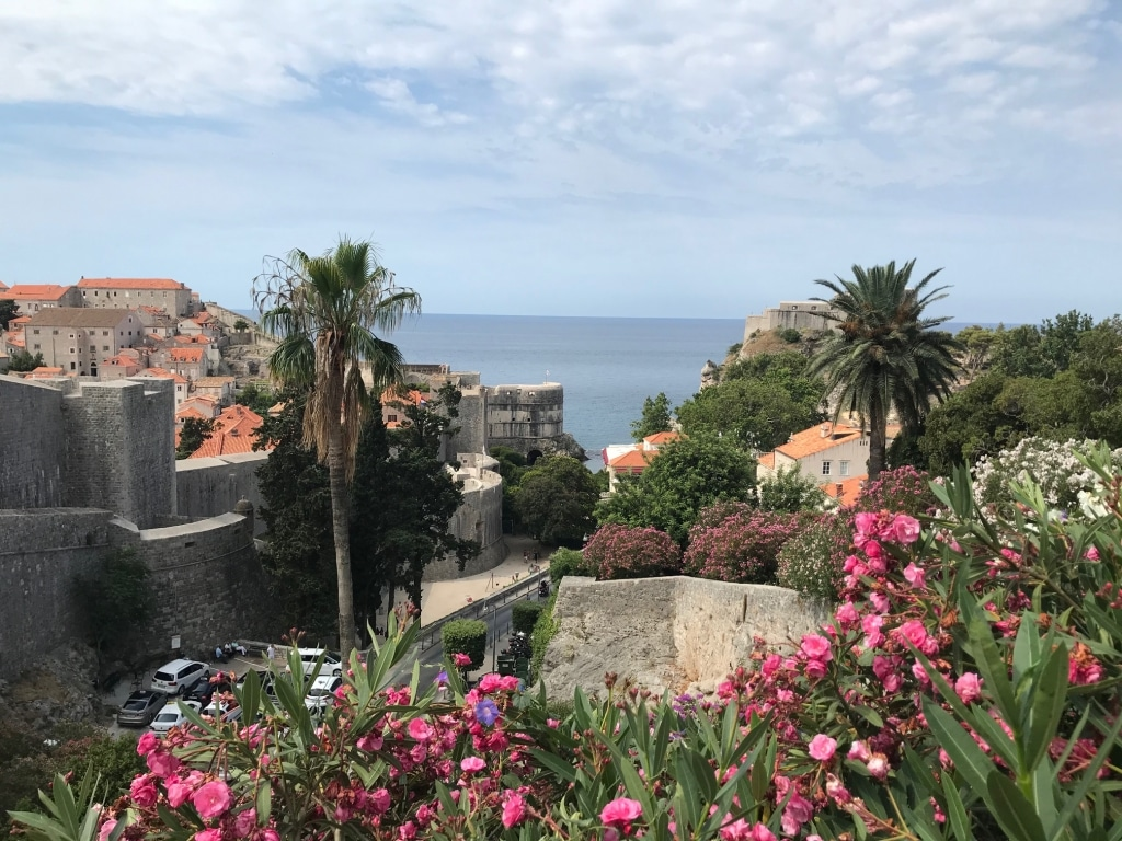 Dubrovnik en fleurs